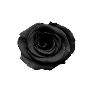ROSA ETERNA COLOR NEGRO 60 cm